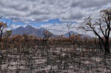 A Ritual for Bushfire Victims